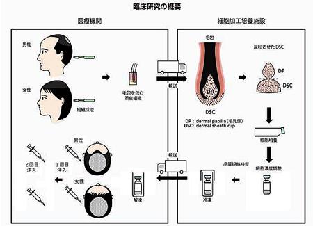 hair_shiseido